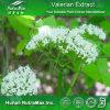 Выдержка Officinalis Valeriana высокого качества (коэффициент: 4:1 ~20: 1)