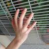 Anti-Arrampicare la rete fissa del giardino della parete dello schermo di collegare della rete fissa