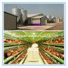 Modular personnalisé Steel Structure Building pour Chicken Feeding