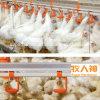 Capezzoli beventi del pollame automatico per la strumentazione dell'azienda avicola