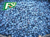 IQF Blueberries Auf Lager Hot Sell