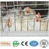 Exploração avícola da gaiola da grelha com a casa de galinha automática