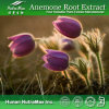 100% Nutural Anemone Root Extract