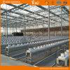 よい出現の長い寿命のガラスマルチスパンの温室
