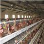 96 عصافير, 120 عصافير, 128 عصافير, 160 عصافير, 256 عصافير طبقة دجاجة أقفاص