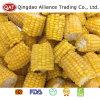 Espigas de milho doce Frozen com qualidade superior