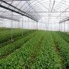 Folha de policarbonato Green House para Vegebable Estrutura de alumínio comercial