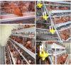 4 rangées 128 cages de batterie de poulet de couche d'oiseaux