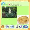 Auszug Puder/Sarsaponin Yucca-Wurzel-Auszug-/Yucca-Filamentosa