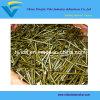 De gele Zink Geplateerde Spijkers van het Staal (1/2  - 14 )