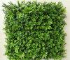 Вертикальный Greenery засевает панели травой украшения стены