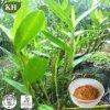 Чисто естественное 10:1 выдержки коэффициента выдержки Dendrobium