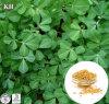 Выдержка семени Fenugreek HPLC поставкы 4-Hydroxyisoleucine 1%-50% фабрики ISO