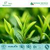 Grüner Tee-Auszug