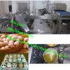 Séparateur d'oeufs pour l'usine/oeuf de biscuits cassant et séparant la machine