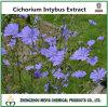 100% naturel Topinambour Cichorium intybus Extrait de la poudre de racine avec l'inuline 50%- 95 %