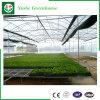 China-Hersteller-Kontrollsysteme GlasVenlo Gewächshaus für Blumen