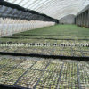 Nueva red agrícola de la cortina del PE con ULTRAVIOLETA (YHZ-SDN14)