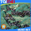 Redes 100% verde-oliva da colheita do HDPE do Virgin