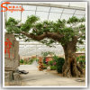 정원 훈장 섬유유리 인공적인 플랜트 Ficus 나무