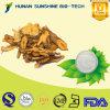 Extrait géant de rhizome de Knotweed de remède de fines herbes de toux