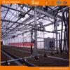 Chambre verte de polycarbonate de Multi-Envergure à haute production de feuille