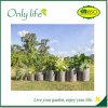 Onlylife das Pflanzen wachsen die Beutel, die vom Wachstum-freundlichen Filz gebildet werden