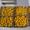 Supplier professionale per Fresh Baby Mandarin Orange
