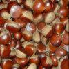 Nueva cosecha de castañas sabroso