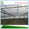 최신 판매 야채와 꽃을%s 다중 경간 아치 온실