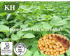 콩 추출 /Soybean Isoflavones Extract/Herbal 추출