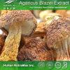 Выдержка Blazei Agaricus высокого качества (полисахариды 10%~50%, 4:1 ~20: 1)
