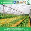 Парник полиэтиленовой пленки для растущий овоща и плодоовощ