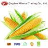IQF початки сахарной кукурузы с хорошей ценой