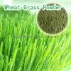 Пшеница трава выжмите сок из порошка