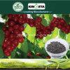 Il carbonio dell'acido pirolegnoso di Kingeta ha basato il fertilizzante composto NPK 28-6-6