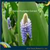 Spica Prunellae extracto, extracto de Spica Prunellae vulgaris