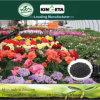 Il carbonio del fertilizzante del polimero di Kingeta ha basato il fertilizzante organico biologico
