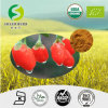 Gojiの工場は100%自然なGojiの果実の粉最上質の証明された有機性80mesh Gojiの粉を供給する