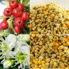 Bienen-Blütenstaub, der oberste reine wilde Weißdorn-Bienen-Blütenstaub, selten, keine Antibiotika, keine Schädlingsbekämpfungsmittel, kein pathogenes Bakterium, verlieren das Gewicht, krebsbekämpfend, ausdehnen das Leben, Biokost