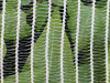 بركة تغذية حبّة برد حارس شبكة زراعة بلاستيكيّة شبكة أمان مضادّة عصفور تشبيك