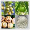 Acido citrico idrossilato 60% dell'estratto della Cambogia di Garcinia
