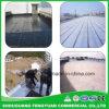 Membrane imperméable à l'eau modifiée par Sbs fiable d'usine avec le prix bas