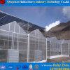 Multispan 나무 딸기를 위한 상업적인 Hydroponic PC 장 온실