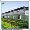 Invernadero de la hoja de la PC del Multi-Palmo con los Seedbeds convenientes