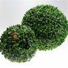 인공적인 회양목 잔디는 인공적인 공 담쟁이 담을 산울타리로 두른다