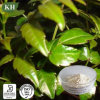 طبيعيّ كرم شاي مقتطف [مريستين] 50%-98% كوليستيرول [لوور]