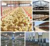 Het moderne Gebouwde Geprefabriceerde Landbouwbedrijf van het Gevogelte met Volledige Vastgestelde Apparatuur