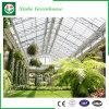 Serres chaudes en verre d'envergure multi d'agriculture pour la plantation