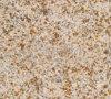 G682花こう岩の山東の黄色い花こう岩の平板のタイル